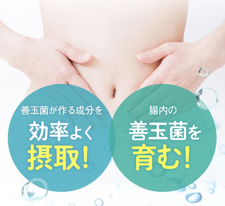 善玉菌が作る成分を効率よく摂取! 腸内の善玉菌を育む!